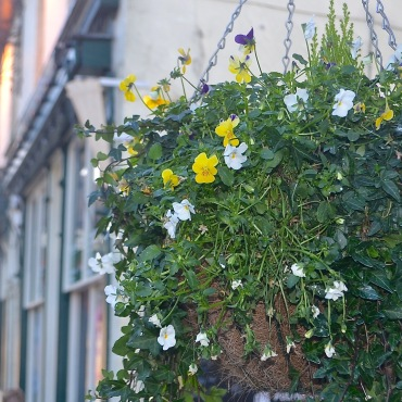 pub-flowers